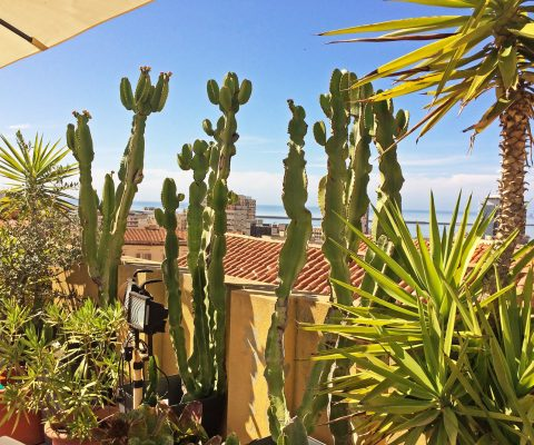 Succulent plants terrace B&B St.Remy